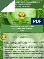 PHT Kubis Kel Ayu Nisa Terbaru (Edit)