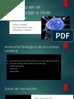 Fisiología en El Aprendizaje a Nivel Cerebral