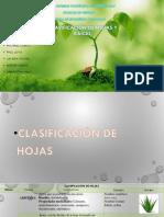 Presentacion Botanica