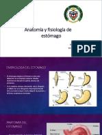 anatomayfisiologadeestomago