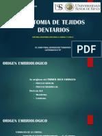 13. Anatomia de Tejidos Dentarios