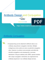 Antibody Design and Conjugation