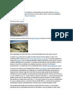 Áreas culturales oasisamerica