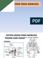 ppsistemgerakpadamanusia-131126174556-phpapp02