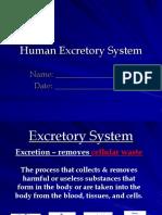 Excretory System Ppt
