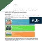 Rx IGNEAS.pdf