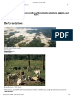 Deforestation _ Threats _ WWF