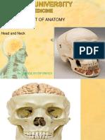 Skull.ppt