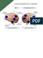 Clasificación de Alteraciones Neuropsicológicas Según Localización Hemisférica y Según Territorios Vasculares