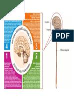 Sistema Nervioso Estructuras y Funciones