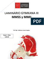 Laminario Gymkana III - Anatomía y Cinesiología