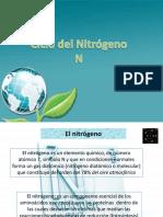 Ciclo Del Nitrogeno 3