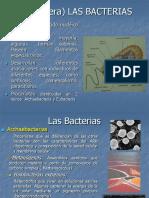 11-_Las_Bacterias_2014.pdf