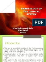 Embryology Genital System