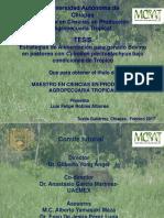 Presentación Tesis Estrategias 2017 (1)