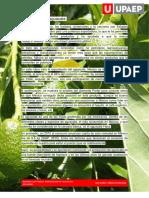 Exportación de aguacate.pdf