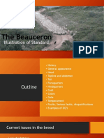 the beauceron - presentation final