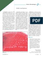 Rothia mucilaginosa.pdf
