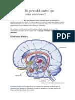 Cuáles Son Las Partes Del Cerebro Que Controlan Nuestras Emociones