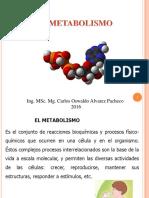 3.-METABOLISMO