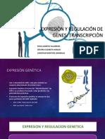 Expresiòn y Regulación de Genes Transcripcion