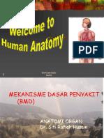 Anatomi Organ Dr.siti Rafiah Husain