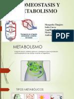 Homeostasis y Metabolismo