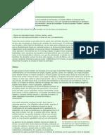 [Medicina Veterinaria El Lenguaje de Los Gatos