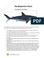 About Megalodon