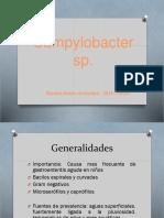 Campylobacter Sp