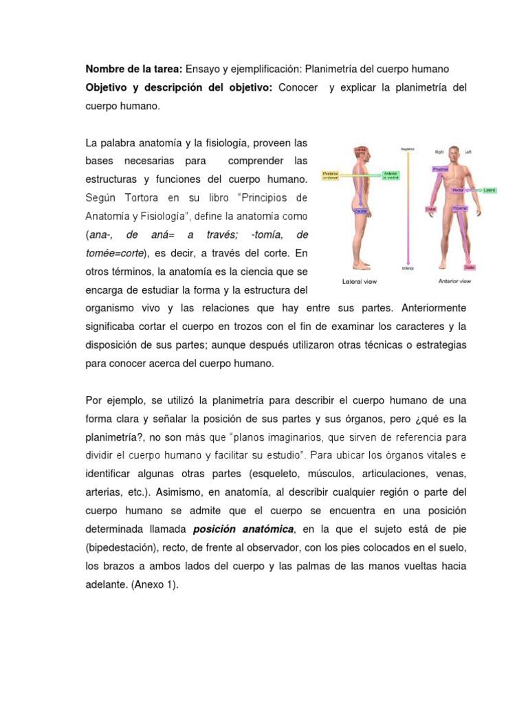Hermosa Definir La Anatomía Y Fisiología Viñeta - Anatomía de Las ...