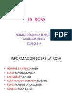 LA  ROSA.pptx