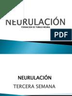 5. Formacion Del Tubo Neural