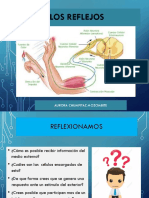 NEUROFISIOLOGIA REFLEJOS