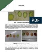 Resultados Frutos (1)