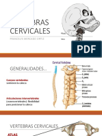 columnacervicales-160928015002 (1)