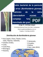 Bacteriosis y Hongos Arroz.set. 2016