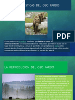 EL OSO PARDO POWER POINT.pptx