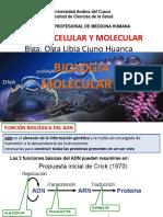 B-CELULAR Y MOLECULAR 2015 XI TRANSCRIP.pdf