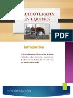 Fluidoterapia' Grupo 1