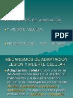 Adaptacion y Muerte Celular, Clase.