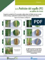 Escala de severidad de la Pudricion del cogollo (PC) afiche.pdf