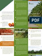 Por Qué El Cultivo de La Palma de Aceite Es Único y Diferenciado 2017