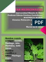 diapositivasplantasmedicinales-120330082833-phpapp02
