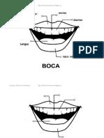 boca CARITAS.pdf