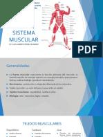 Sistema Muscular 1