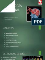 fisiologia cerebral.pdf