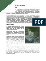Asentamientos Del Bajo Rio Negro