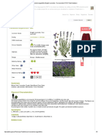 Lavandula Angustifolia English Lavender, True Lavender PFAF Plant Database