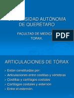 articulacionesdeltrax-100603103046-phpapp02